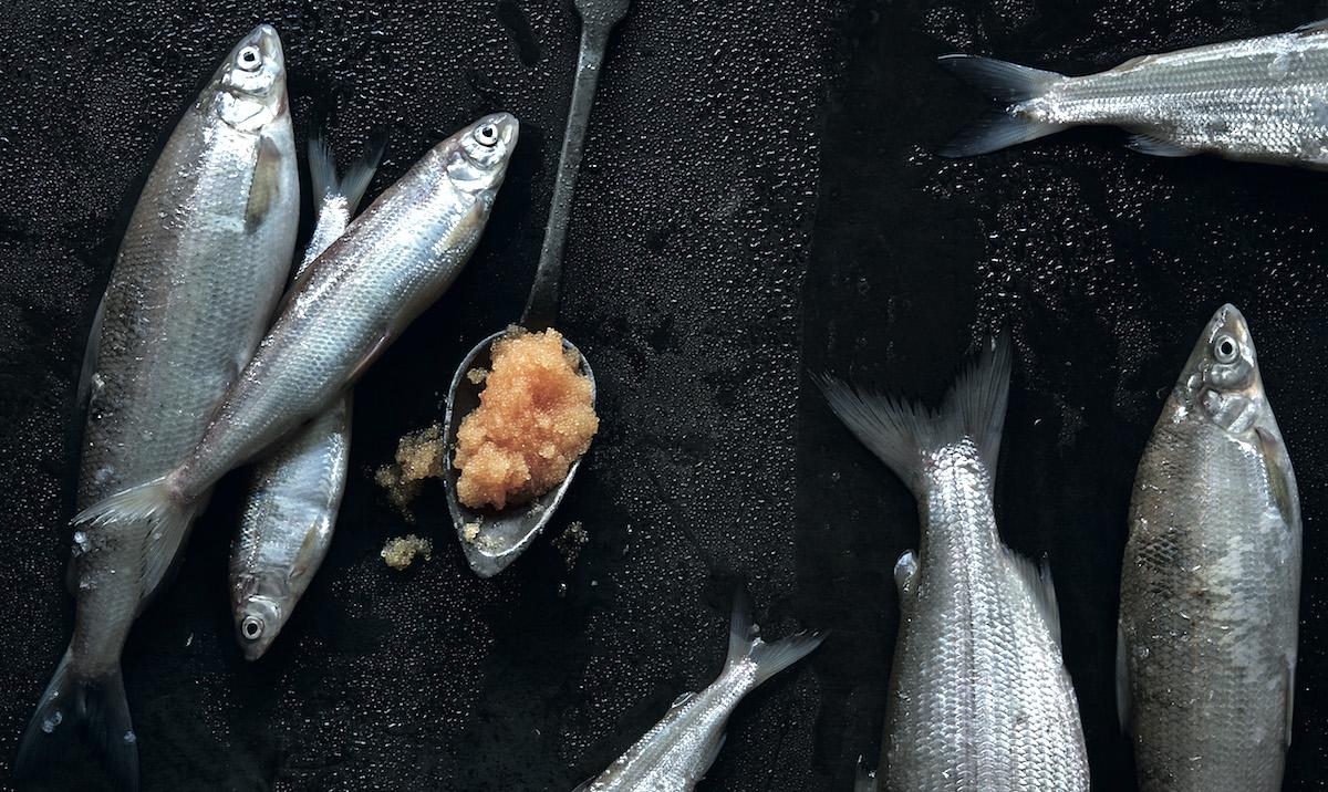 Kunst: So richtet Sylvan Müller seine Fotografien sinnlich an.