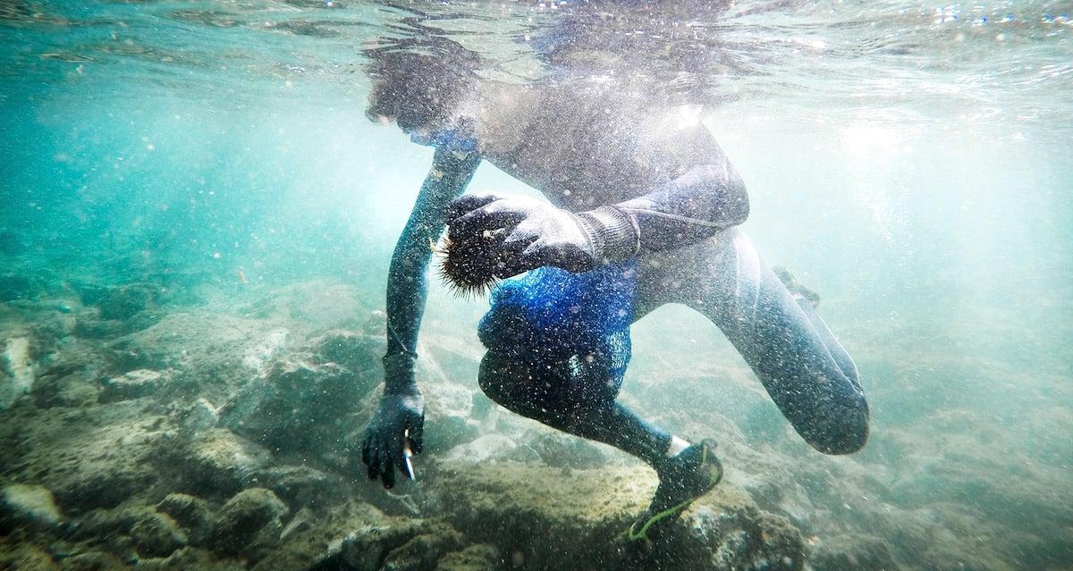 Gefährlich: Das Tauchen nach Seeigeln kann auch unter die Haut gehen.