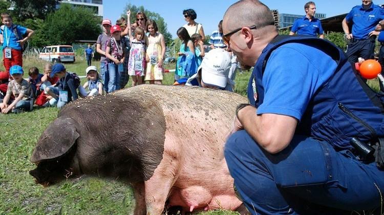 April, April. Neu werde die Zuger Polizei Schweine statt Hunde einsetzen, hiess es bei uns am 1. April. Zu schade, ist's nicht wahr.