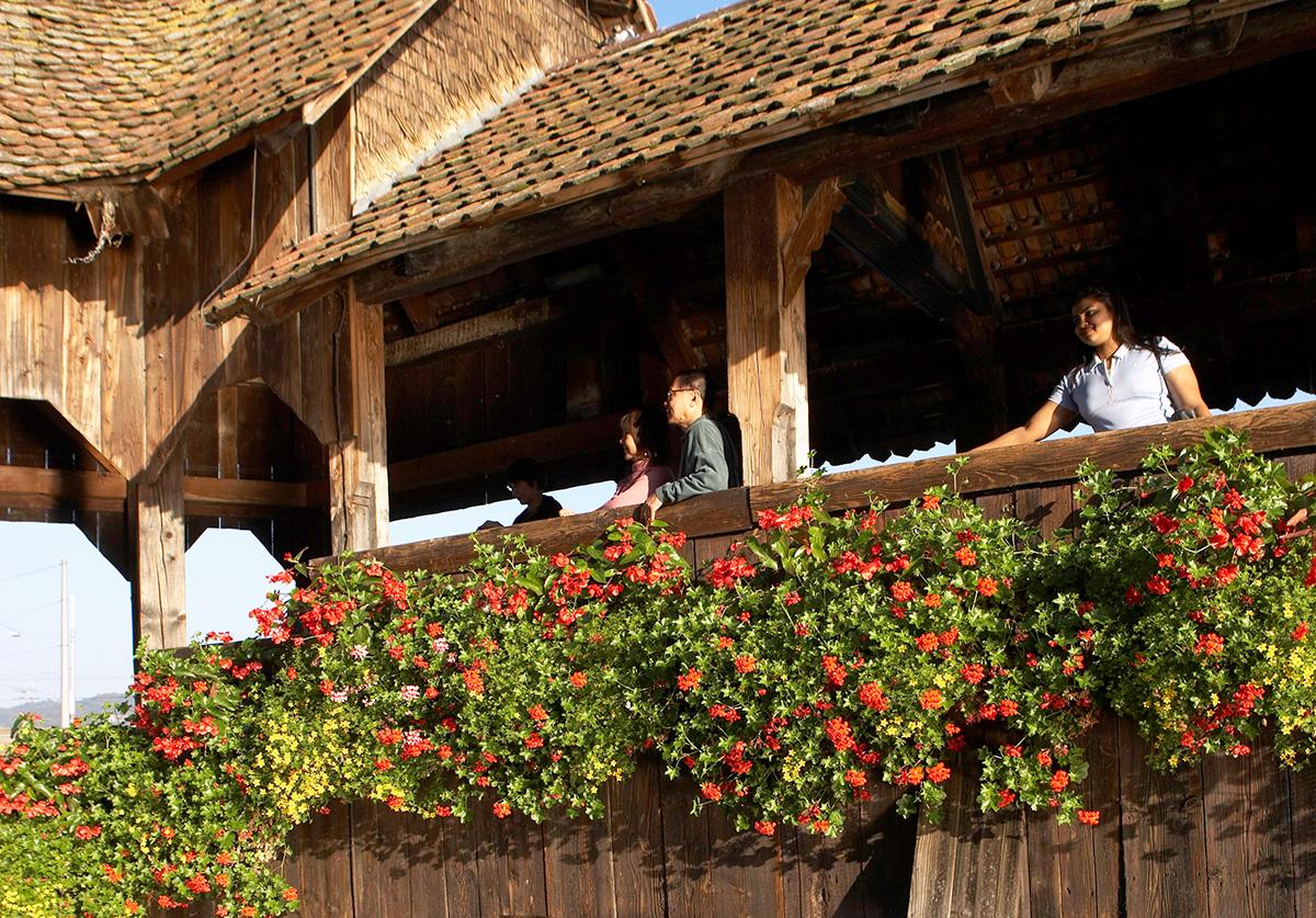 Geranien an der Kapellbrücke: Eine Blume mit Migrationshintergrund, die erst im 19. Jahrhundert in Mode kam.
