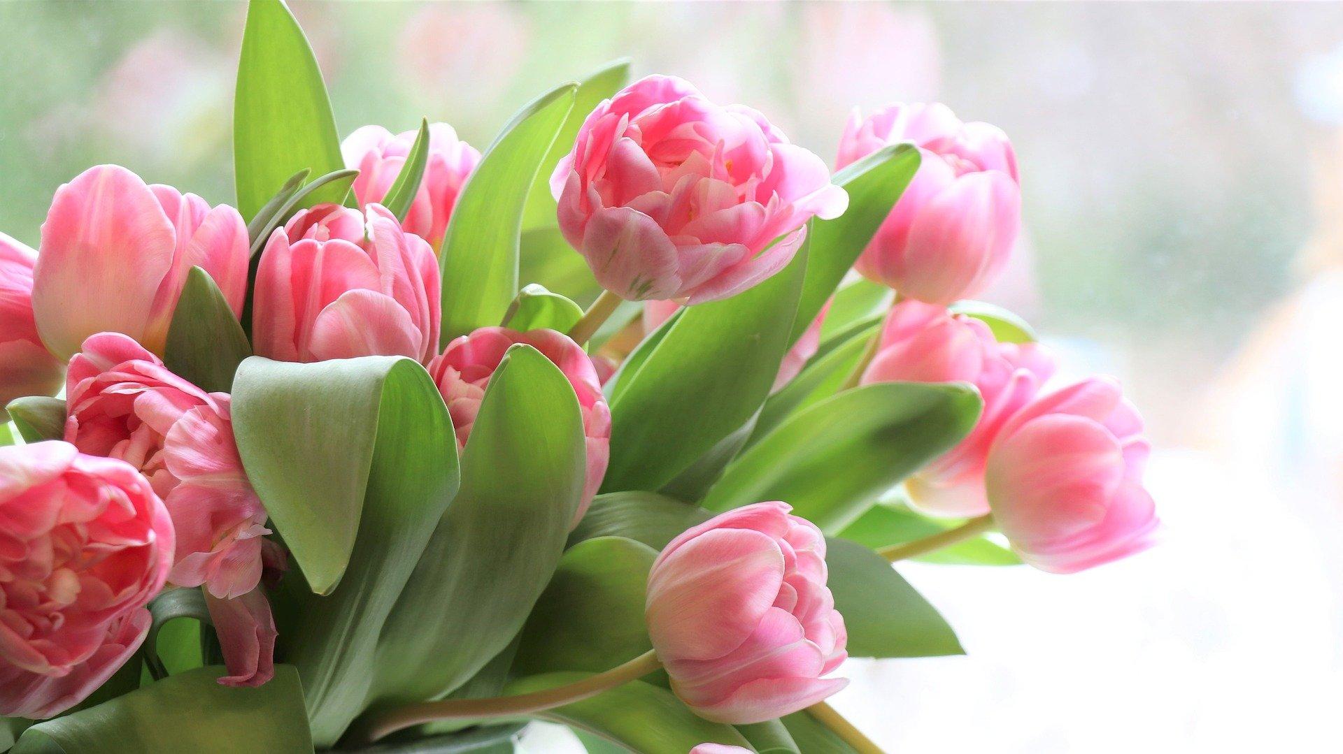 Tulpen aus Amsterdam – oder von der lokalen Floristin