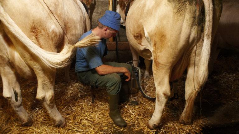 Zuger Landwirte: Am meisten Mängel, am wenigsten Sanktionen