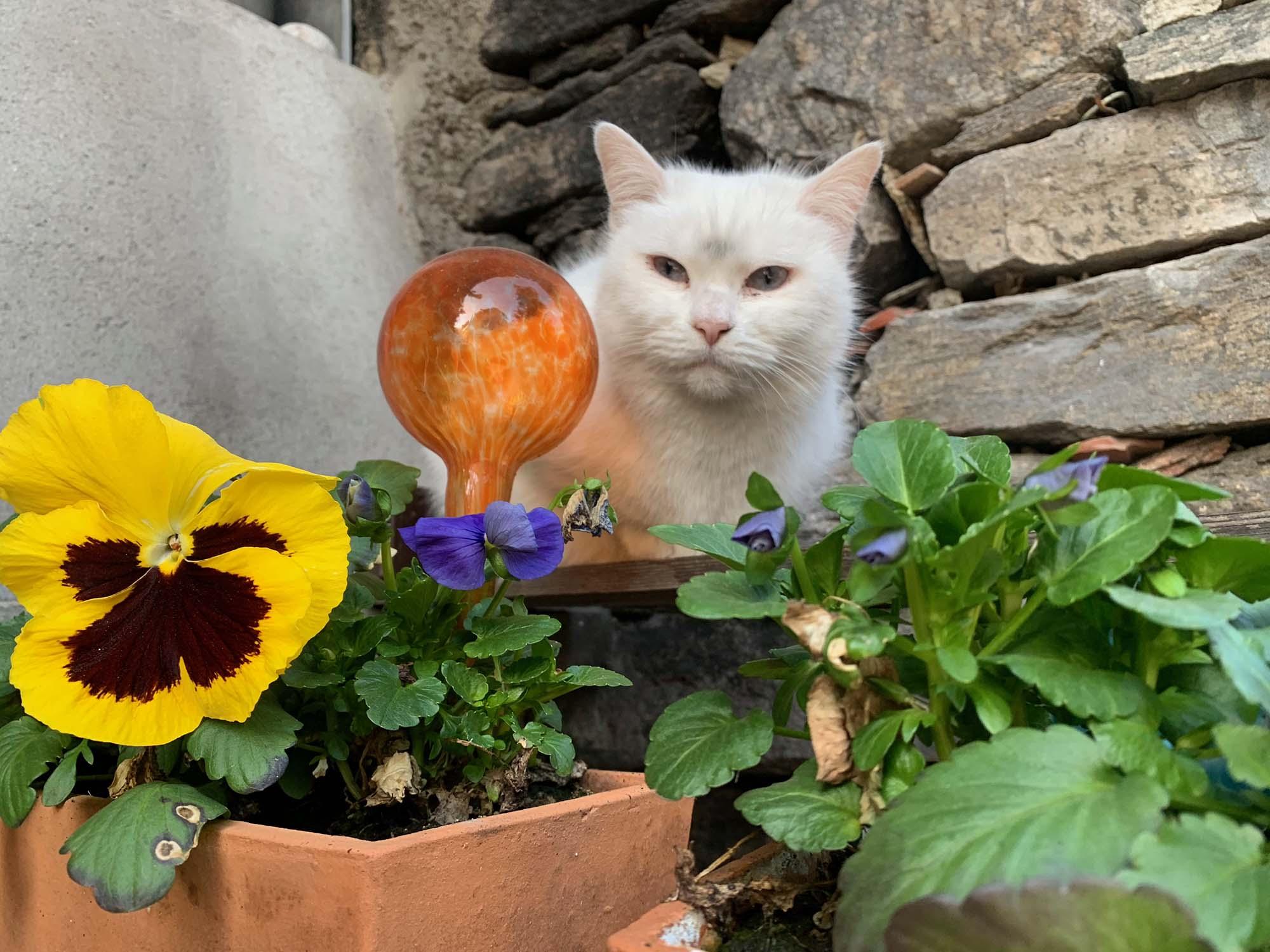 Gärtnerkatze
